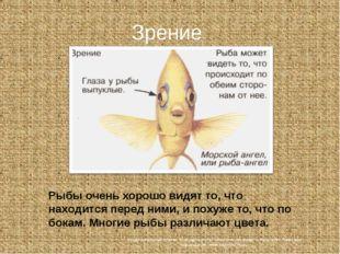 Зрение Рыбы очень хорошо видят то, что находится перед ними, и похуже то, что