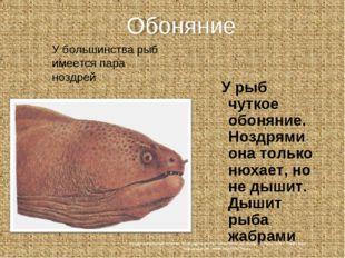 У рыб чуткое обоняние. Ноздрями она только нюхает, но не дышит. Дышит рыба ж