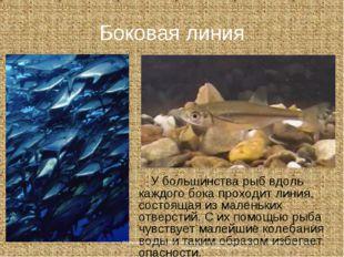 Боковая линия У большинства рыб вдоль каждого бока проходит линия, состоящая