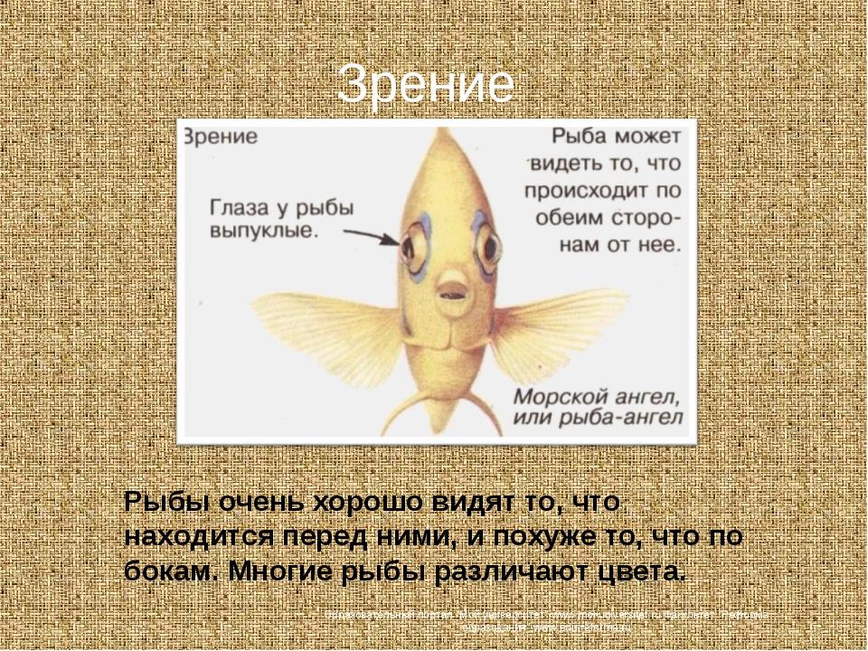 Зрение Рыбы очень хорошо видят то, что находится перед ними, и похуже то, что...