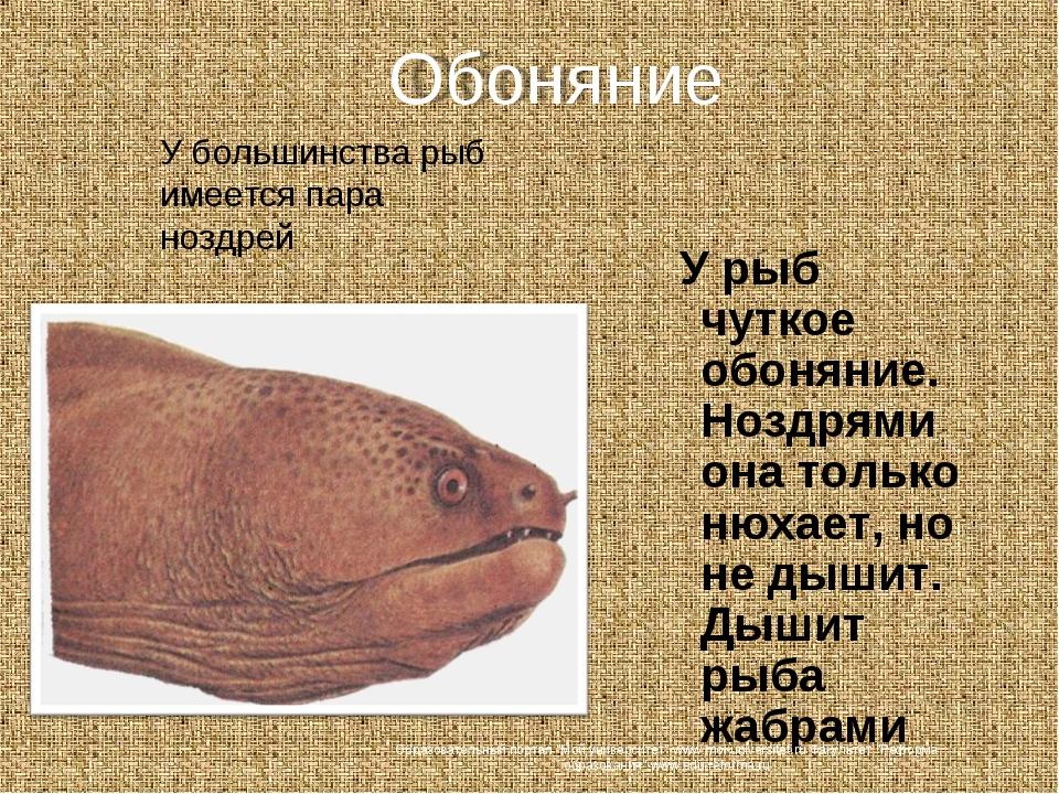 У рыб чуткое обоняние. Ноздрями она только нюхает, но не дышит. Дышит рыба ж...