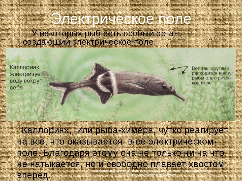 Электрическое поле У некоторых рыб есть особый орган, создающий электрическое...