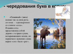 - чередования букв в корне:  «Сохатый» (лось) назван так за свои рога;