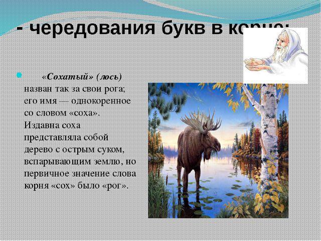 - чередования букв в корне:  «Сохатый» (лось) назван так за свои рога;...