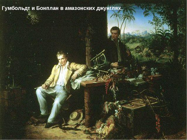 Гумбольдт и Бонплан в амазонских джунглях.