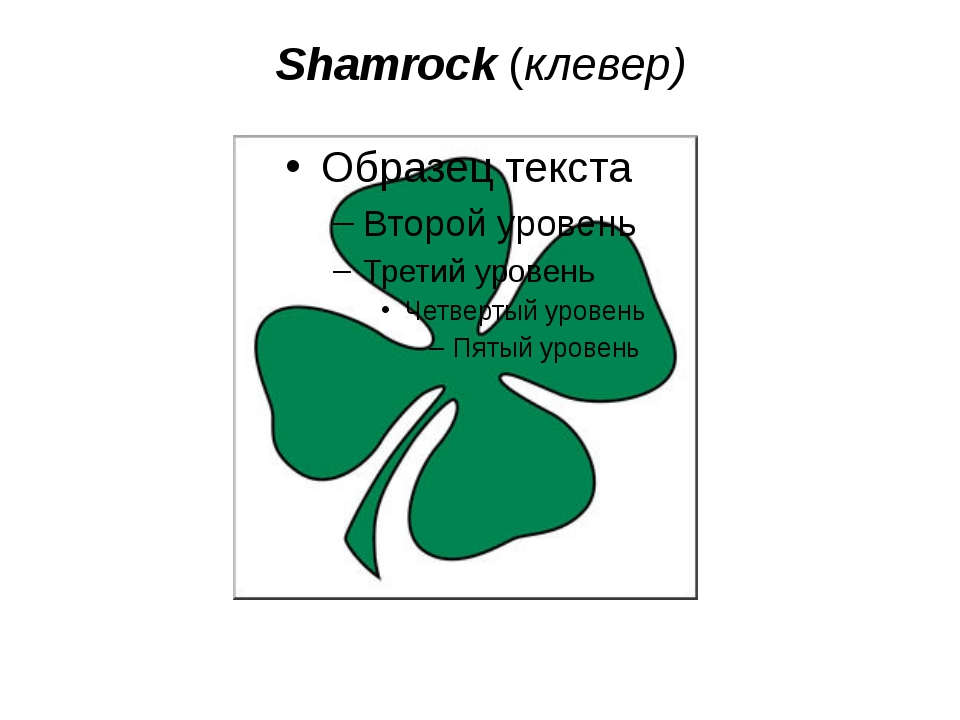 Shamrock (клевер)