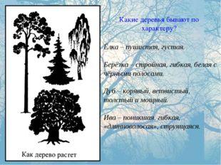 Какие деревья бывают по характеру? Ёлка – пушистая, густая. Берёзка – стройна