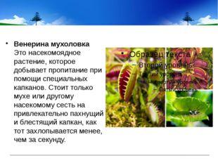 Венерина мухоловка Это насекомоядное растение, которое добывает пропитание п
