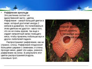 Раффлезия арнольди Это растение состоит из единственной части - цветка. Раф