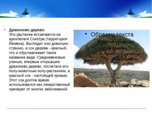Драконово дерево Это растение встречается на архипелаге Сокотра (территория