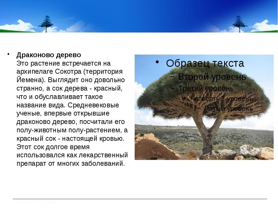 Драконово дерево Это растение встречается на архипелаге Сокотра (территория...