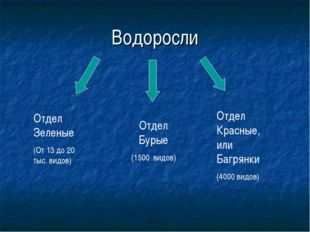 Водоросли Отдел Зеленые (От 13 до 20 тыс. видов) Отдел Бурые (1500 видов) Отд