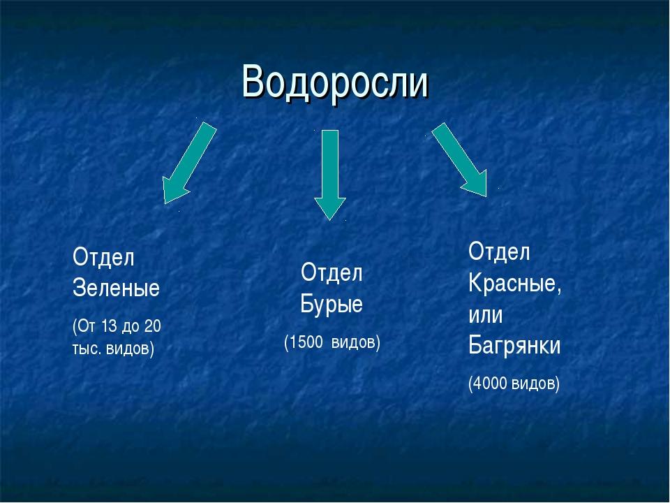 Водоросли Отдел Зеленые (От 13 до 20 тыс. видов) Отдел Бурые (1500 видов) Отд...