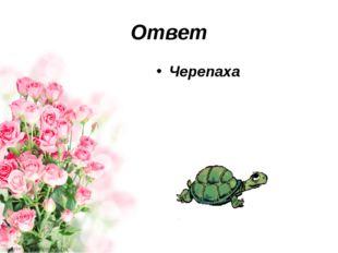 Ответ Черепаха