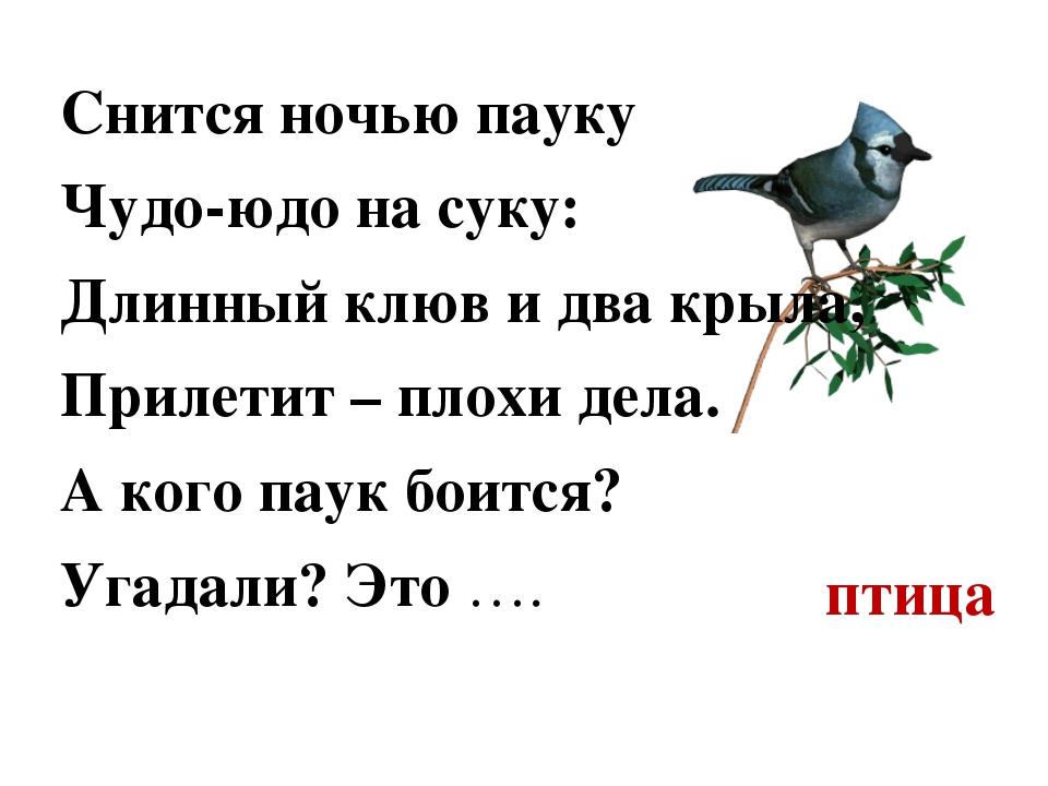 птица Снится ночью пауку Чудо-юдо на суку: Длинный клюв и два крыла, Прилетит...