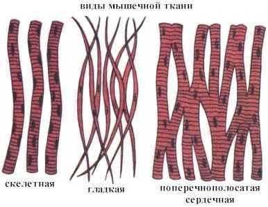виды мыш