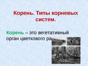 Корень. Типы корневых систем. Корень – это вегетативный орган цветкового раст