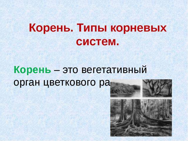 Корень. Типы корневых систем. Корень – это вегетативный орган цветкового раст...