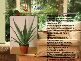 Алоэ Растение обладает множеством полезных для здоровья человека свойств. Ег