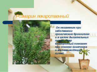 Розмарин лекарственный Он незаменим при заболевании хроническим бронхитом и
