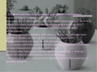 - Диффенбахия идеальное растение для офисов – она успешно очищает воздух от я
