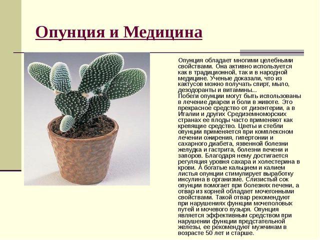 Опунция и Медицина Опунция обладает многими целебными свойствами. Она активно...