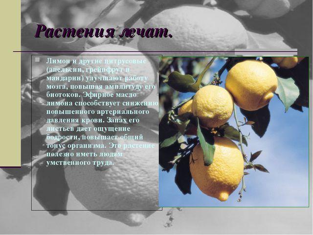 Растения лечат. Лимон и другие цитрусовые (апельсин, грейпфрут и мандарин) ул...