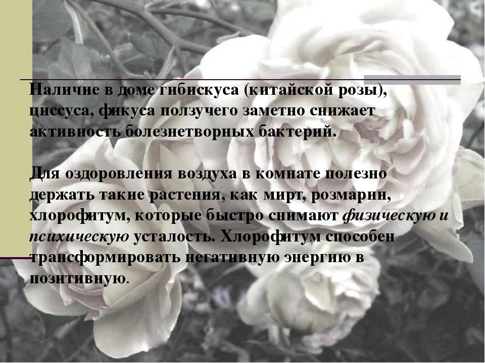 Наличие в доме гибискуса (китайской розы), циссуса, фикуса ползучего заметно...