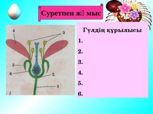 Көбею мүшелері Гүл Жеміс Тұқым