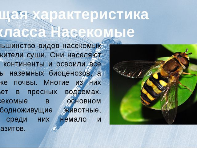 презентация по биологии на тему членистоногие