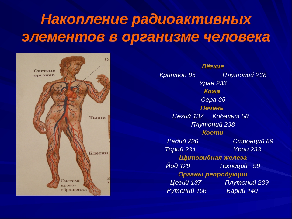 Накопление радиоактивных элементов в организме человека Лёгкие Криптон 85 Плу...