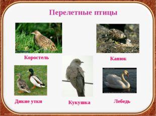 Перелетные птицы Коростель Кукушка Дикие утки Лебедь Канюк