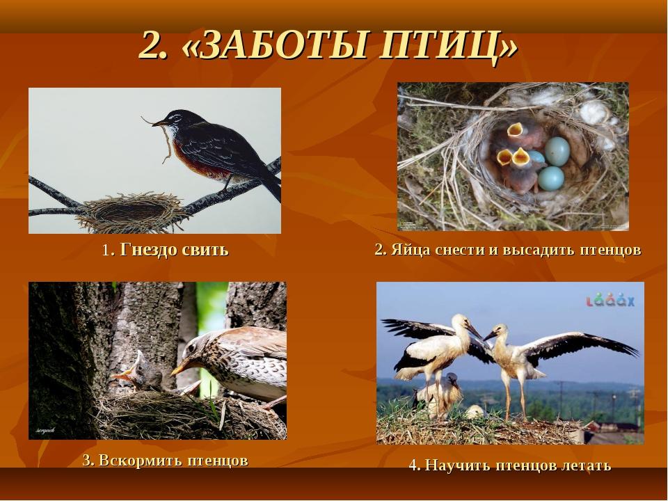 2. «ЗАБОТЫ ПТИЦ» 2. Яйца снести и высадить птенцов