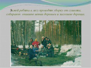 Зимой ребята в лесу проводят уборку от сушняка, собирают опавшие ветви деревь