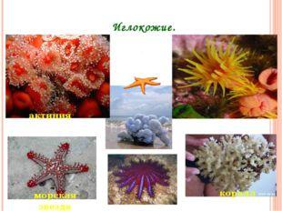 Иглокожие. актиния морская звезда коралл