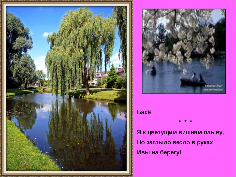 Басё * * * Я к цветущим вишням плыву, Но застыло весло в руках: Ивы на берегу!