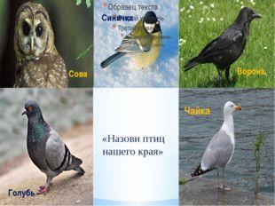 «Назови птиц нашего края» Чайка Ворона Синичка Сова Голубь