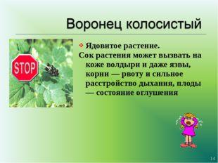 Ядовитое растение. Сок растения может вызвать на коже волдыри и даже язвы, ко
