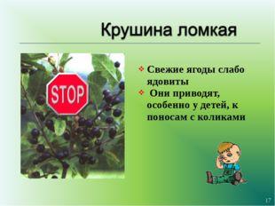 Свежие ягоды слабо ядовиты Они приводят, особенно у детей, к поносам с колика