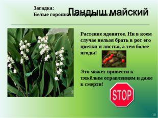 * Загадка: Белые горошки на зелёной ножке? Растение ядовитое. Ни в коем случа