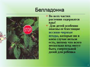 Во всех частях растения содержатся яды! Для детей особенно опасны ее блестящи