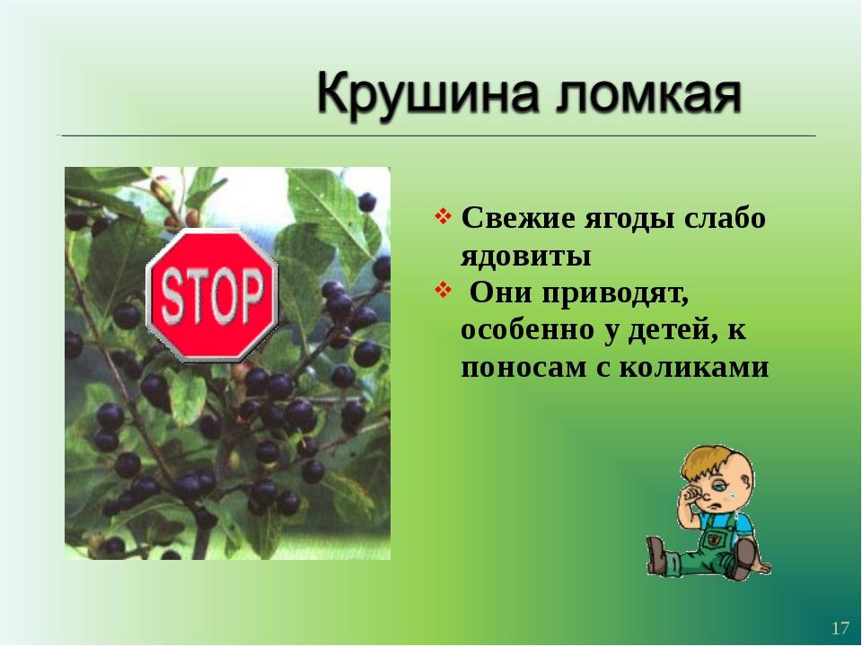 Свежие ягоды слабо ядовиты Они приводят, особенно у детей, к поносам с колика...