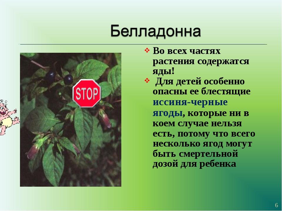 Во всех частях растения содержатся яды! Для детей особенно опасны ее блестящи...