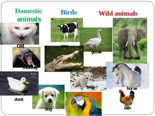 Domestic animals Birds Wild animals cat crocodile goose caw monkey elephant h