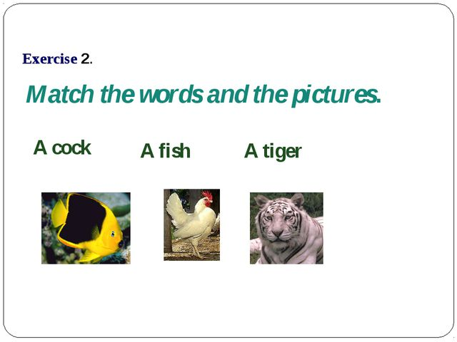 Match the words and the pictures. A fish A cock A tiger Exercise 2.