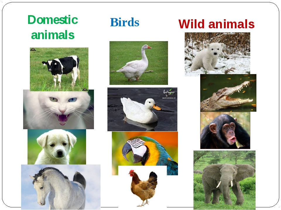 Domestic animals Birds Wild animals