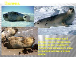Человек и Арктика На островах и во льдах Северного Ледовитого океана работают