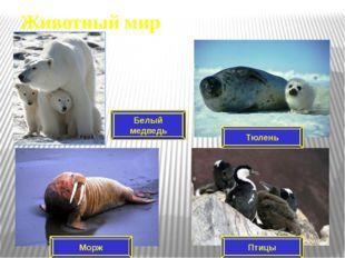 Морж Моржи – близкие родственники тюленей, большие и сильные, и мало кто реша