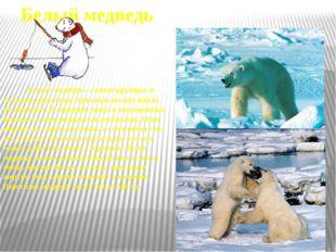 Тюлень Тюлени живут как в Арктике, так и в Антарктике. Тюленям не дает замёрз