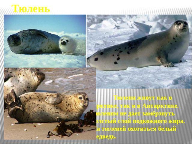 Человек и Арктика На островах и во льдах Северного Ледовитого океана работают...